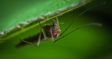 Proč nás fascinují parazité